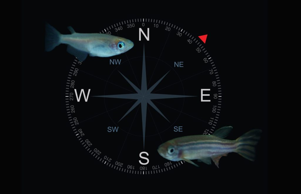 Fish are known to have a sense of magnetoreception.