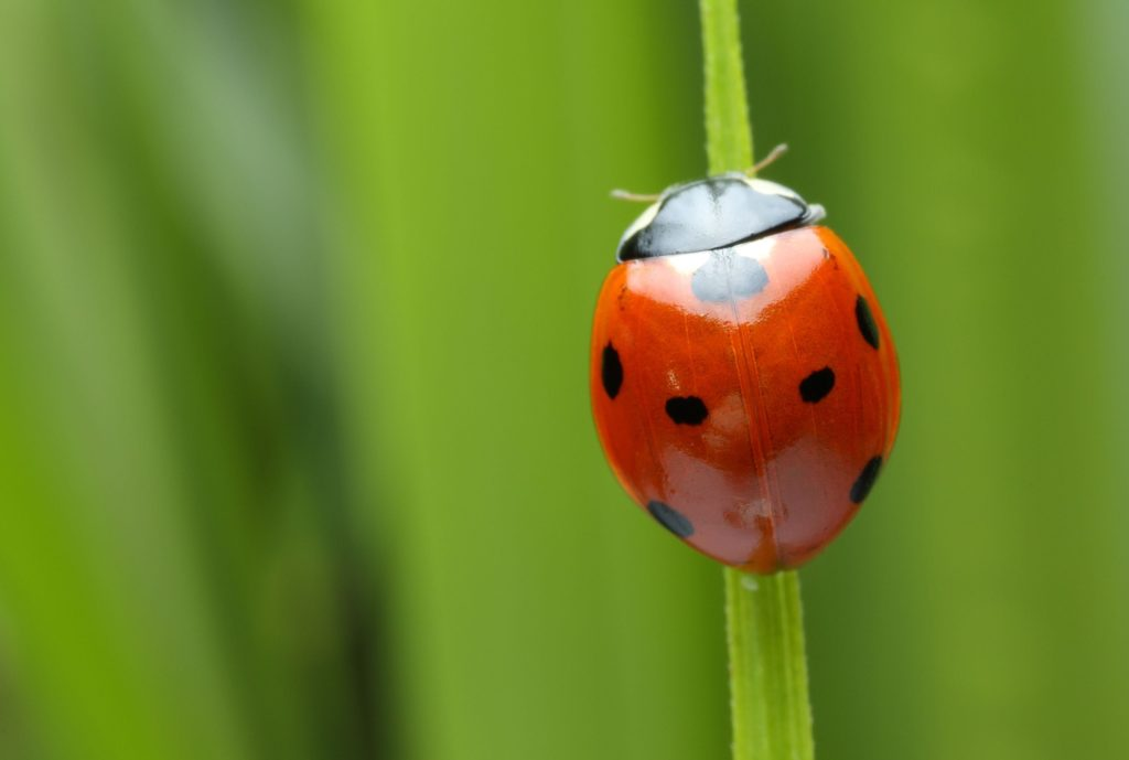 A New Way Of Identifying Possibly Invasive Pests