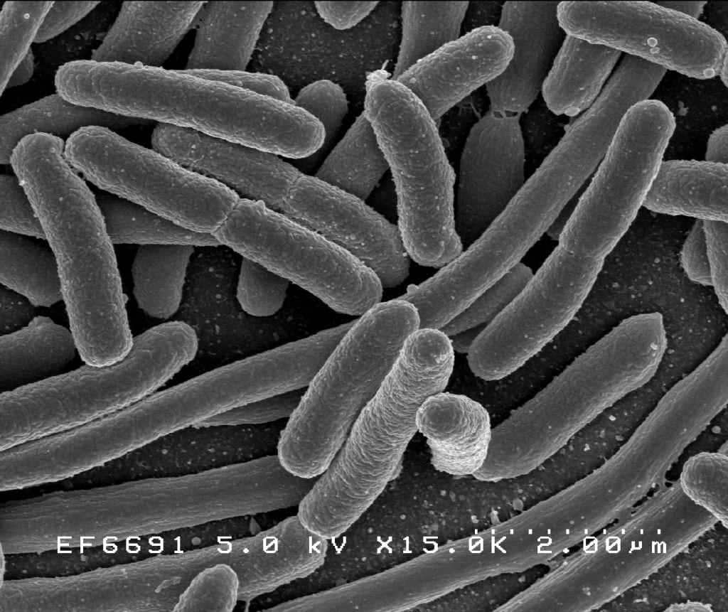 The Bacteria use the electrons to make their own food.