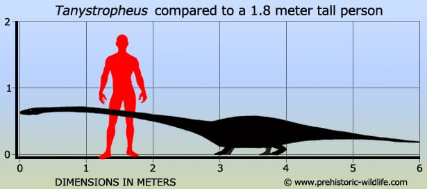 Another Dinosaur Mystery Solved