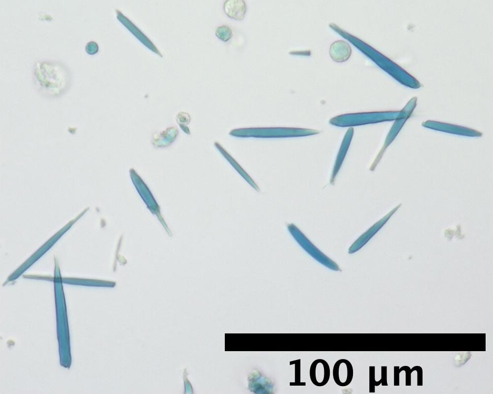 Microscopic crystals are of special interest to physicists.