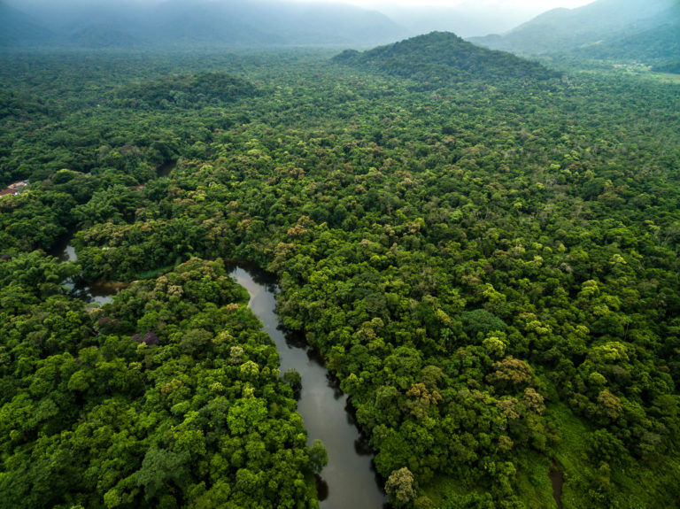 The Amazon Forest may be Accelerating Climate Change